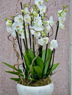 Marie est zen : les coupes d'orchidées