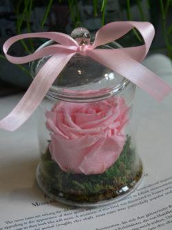 Rose naturalisée rose