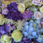 camaieu-blanc-bleu-mauve