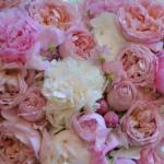 camaieu-pastel-blanc-rose