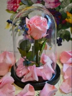 Rose naturalisée rose sur tige XL800x1066